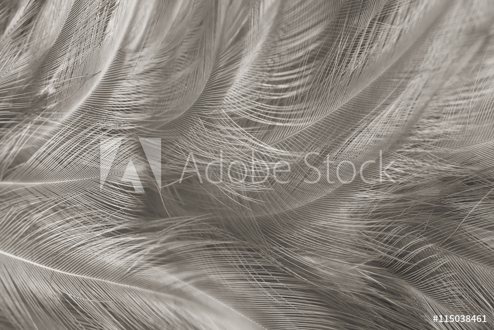 AdobeStock_115038461_Preview
