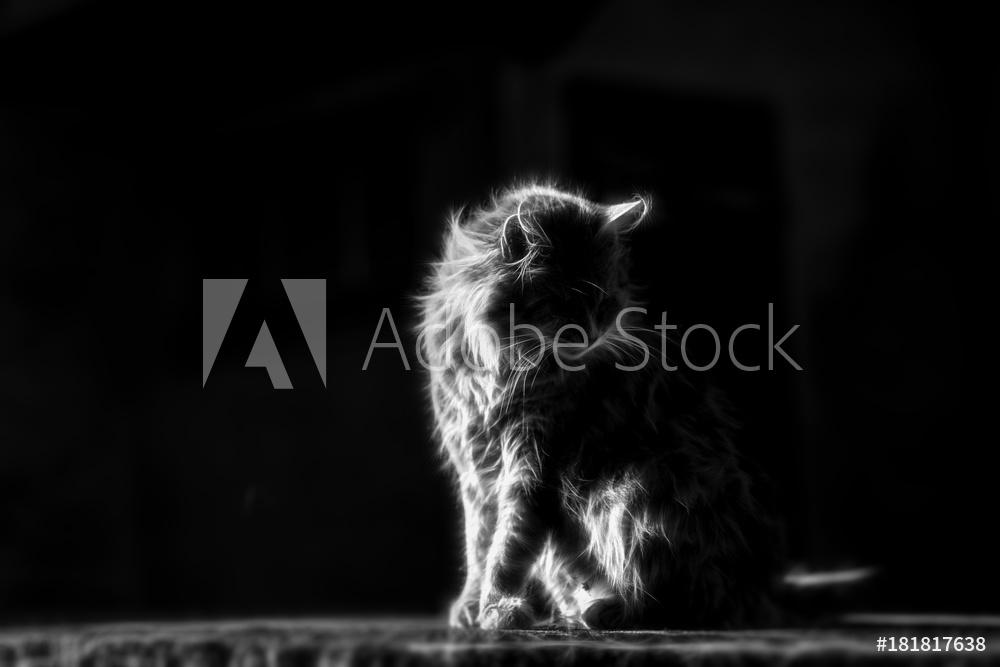 AdobeStock_181817638_Preview