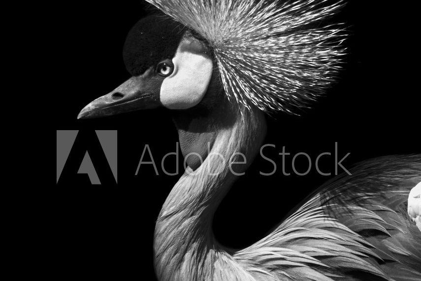 AdobeStock_95178897_Preview